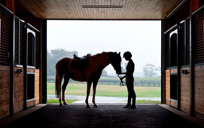 In Virginia, Falling for Horse Country